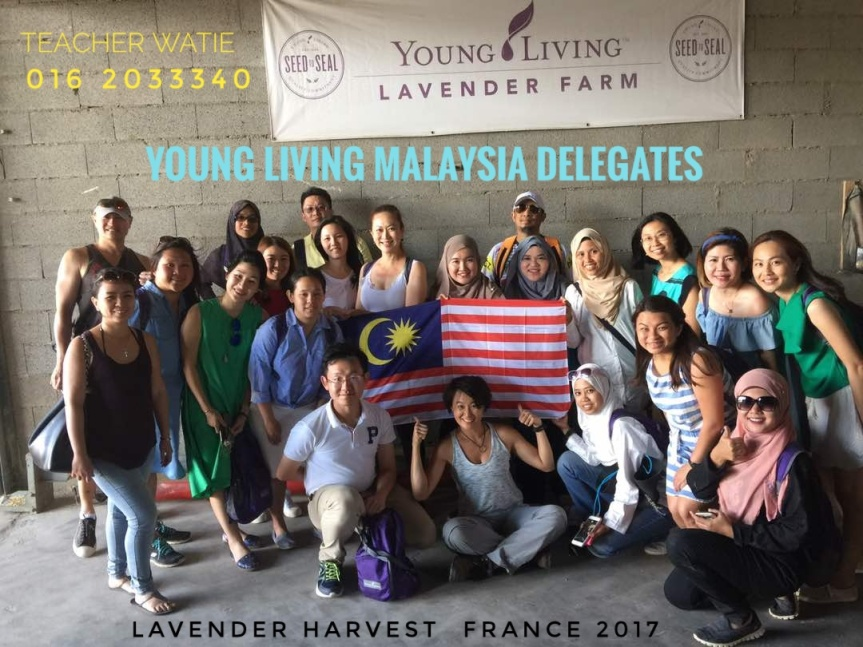 YOUNG LIVING MALAYSIAN DELEGATES : LAVENDER HARVEST 2017 @ MARSEILLES, FRANCE.
