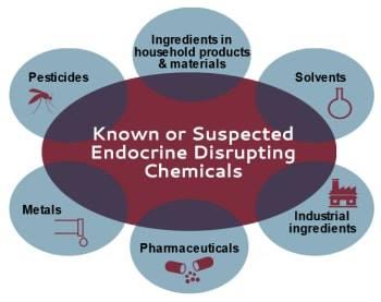 ENDOCRINE DISTRUPTING CHEMICALS (EDCs) DAN KESANNYA TERHADAP KESIHATANMANUSIA!